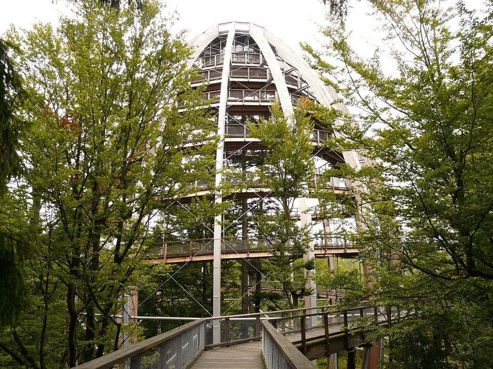 treetop-path-60254_960_7201